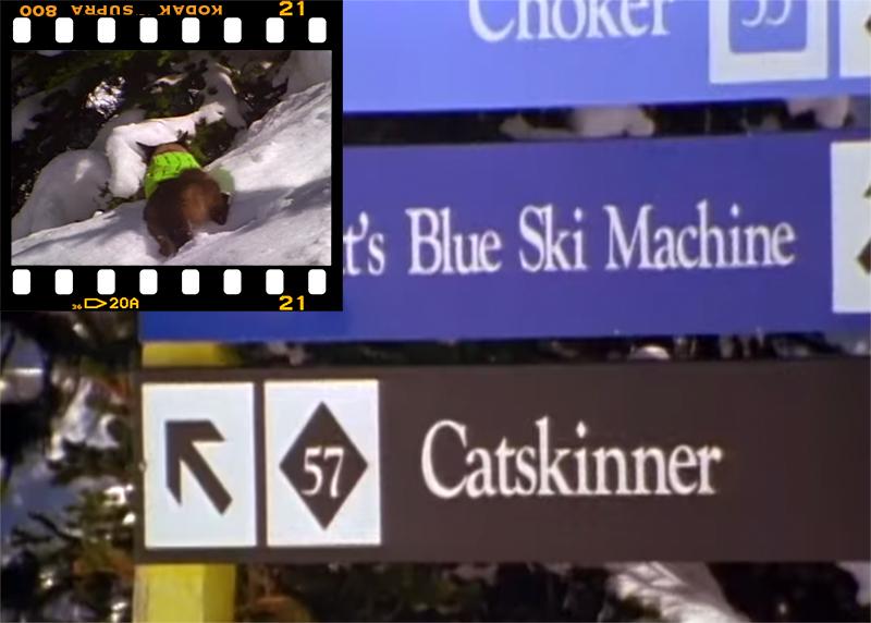 Cat on Skiers Shoulder
